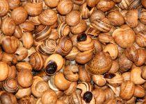 Regionaler Erzeugermarkt in Lagos, Algarve. Hier sind Schnecken im Angebot, das Bild zeigt aus der Nähe fotografierte kleine Schneckenhäuschen.